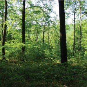 Prirodzená obnova buka [Natural regeneration of beech]