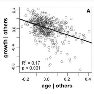 The effect of age on height growth in even-sized saplings of Fagus sylvatica L.