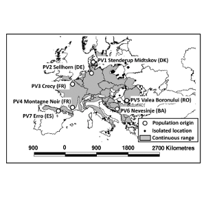 Desiccation and Mortality Dynamics in Seedlings of Different European Beech (Fagus sylvatica L.) Populations under Extreme Drought Conditions