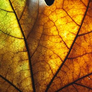 Kontaminované prostredie ako významný stresor rastlín