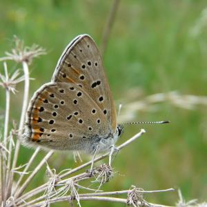 Denné motýle (Lepidoptera, Papilionoidea) lúk kúpeľov Sliač a okolia (Slovensko)
